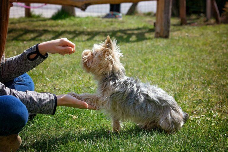 vycvik psa doma