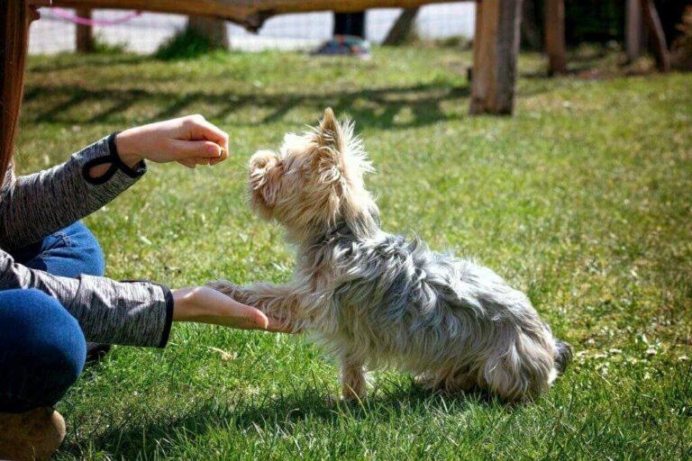 Výcvik psa doma